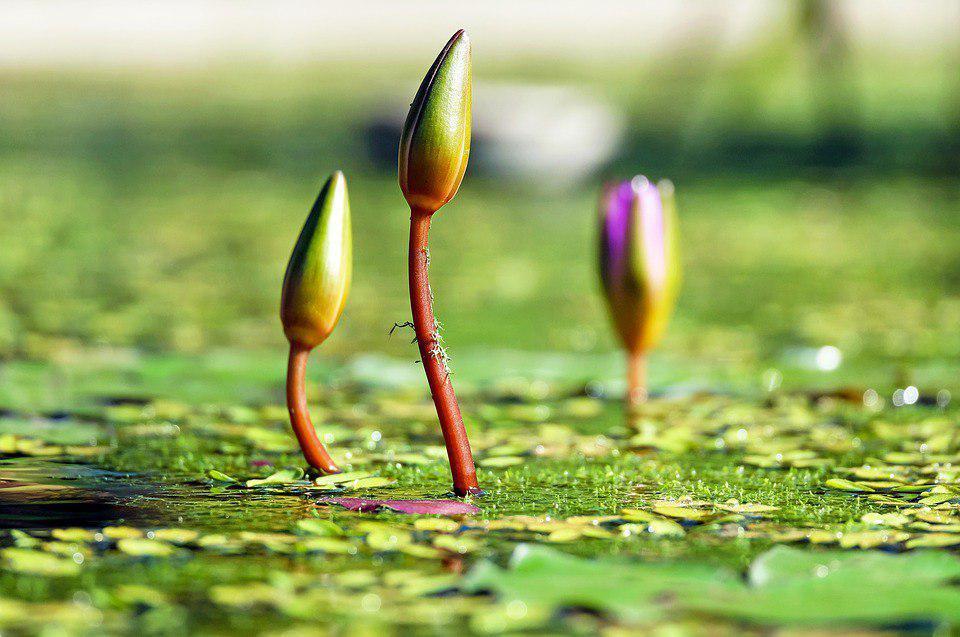 Почистить пруд в Грачевском парке планируют в кратчайшие сроки